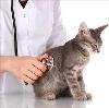 Ветеринарные клиники в Взморье